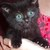 Bobbi CW <Smoky's mom, RIP Sassy 12/2/15>