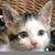 Anne Harwood (Cinco Gatitos)