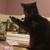 madiechan <Fuzzer of kittens>
