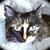 Bleupixie <Vote Kitten Rescue!>