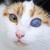 StealthBunny - Kitten Commentator