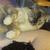 KatPlum (SP's Meowmy!) =^..^=