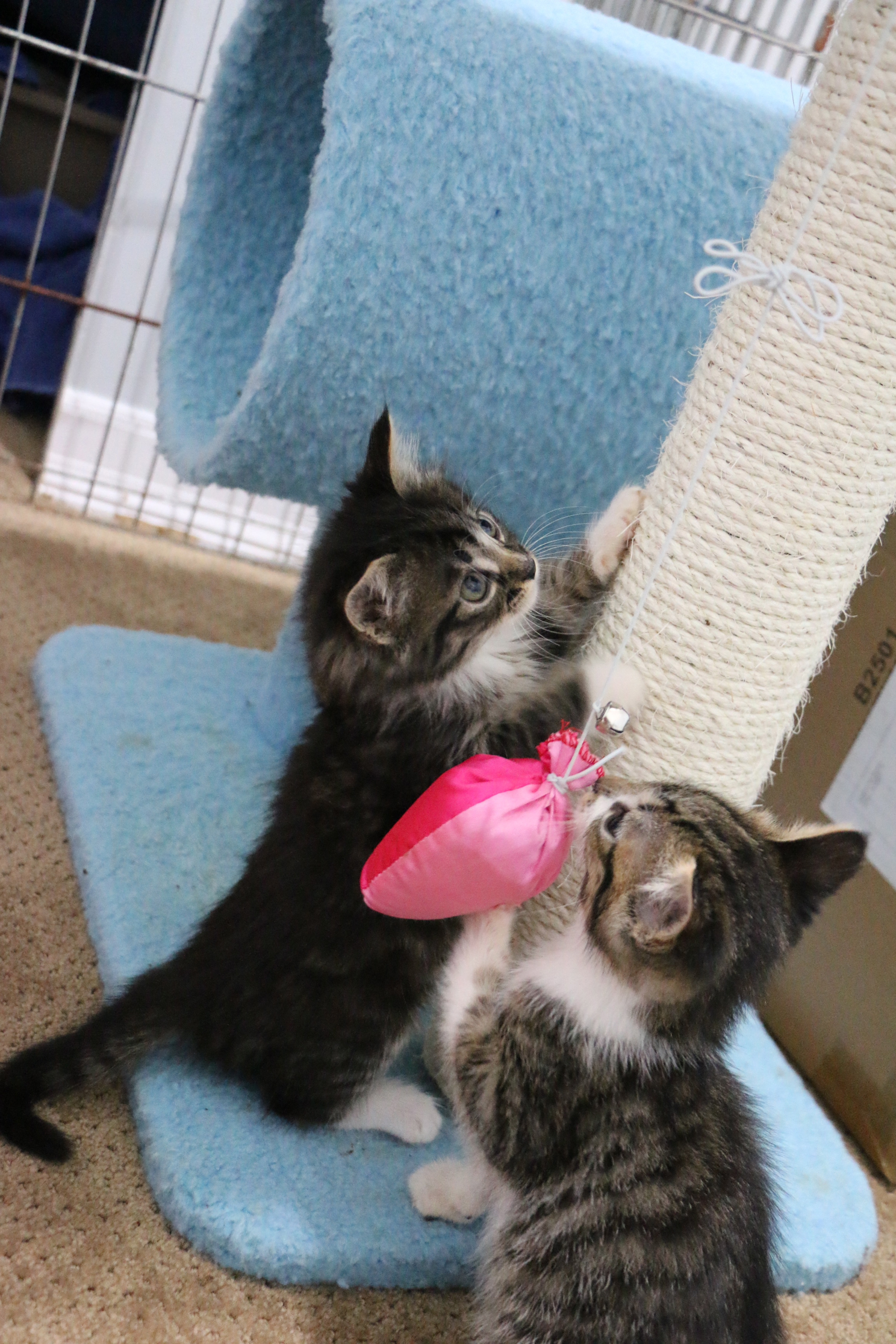Healthy kittens ready for homes on Livestream