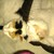 Shari's-kitties#61(S.Hurley)