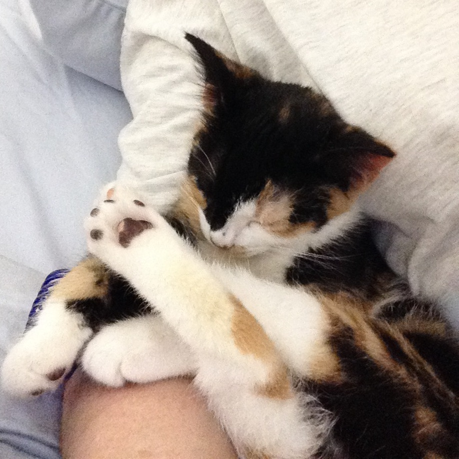 Savina feral mama to four adorable kittens on Livestream
