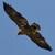 Ptomahawk