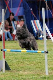 Nordic Championship in agility 2012