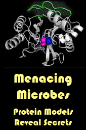Menacing Microbes: Protein models reveal secrets