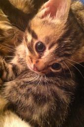 Fleur, Fauno & Flora - Kitten Cuddle Room