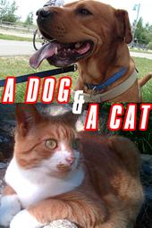 A Dog & A Cat