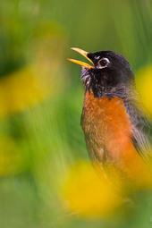 Singing in Spring