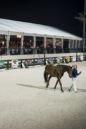 WEF Sport Horse Auction featuring VDL Stud Presentation of Horses Jumping Under Saddle