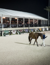 WEF Sport Horse Auction featuring VDL Stud