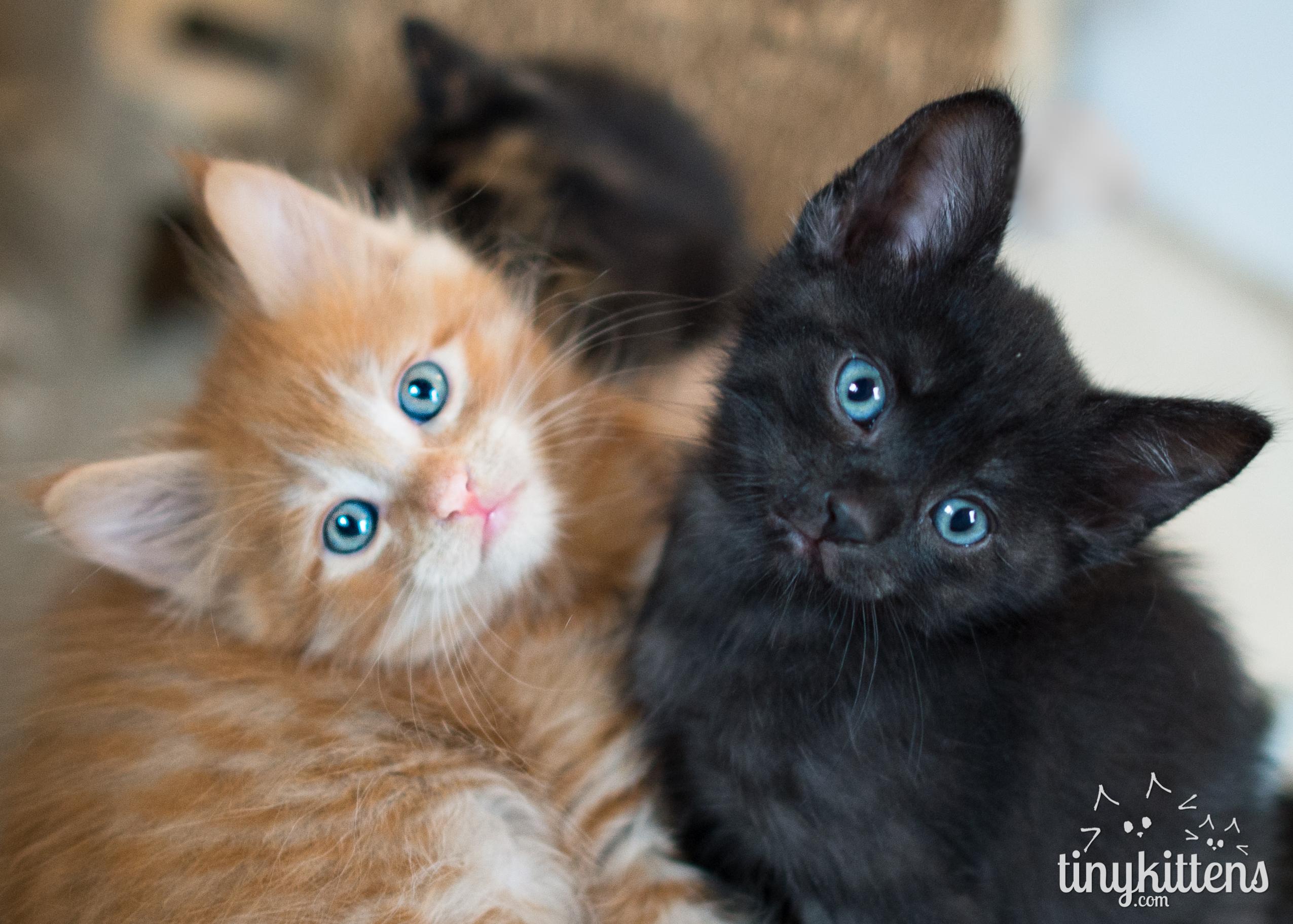 The Dancing Kittens on Livestream