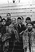 Holocaust & The Jews
