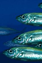Pesca: la industria del silencio