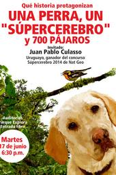 """Qué historia protagonizan una perra, un """"supercerebro"""" y 700 pájaros"""