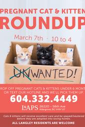 2015 Spring Kitten Roundup