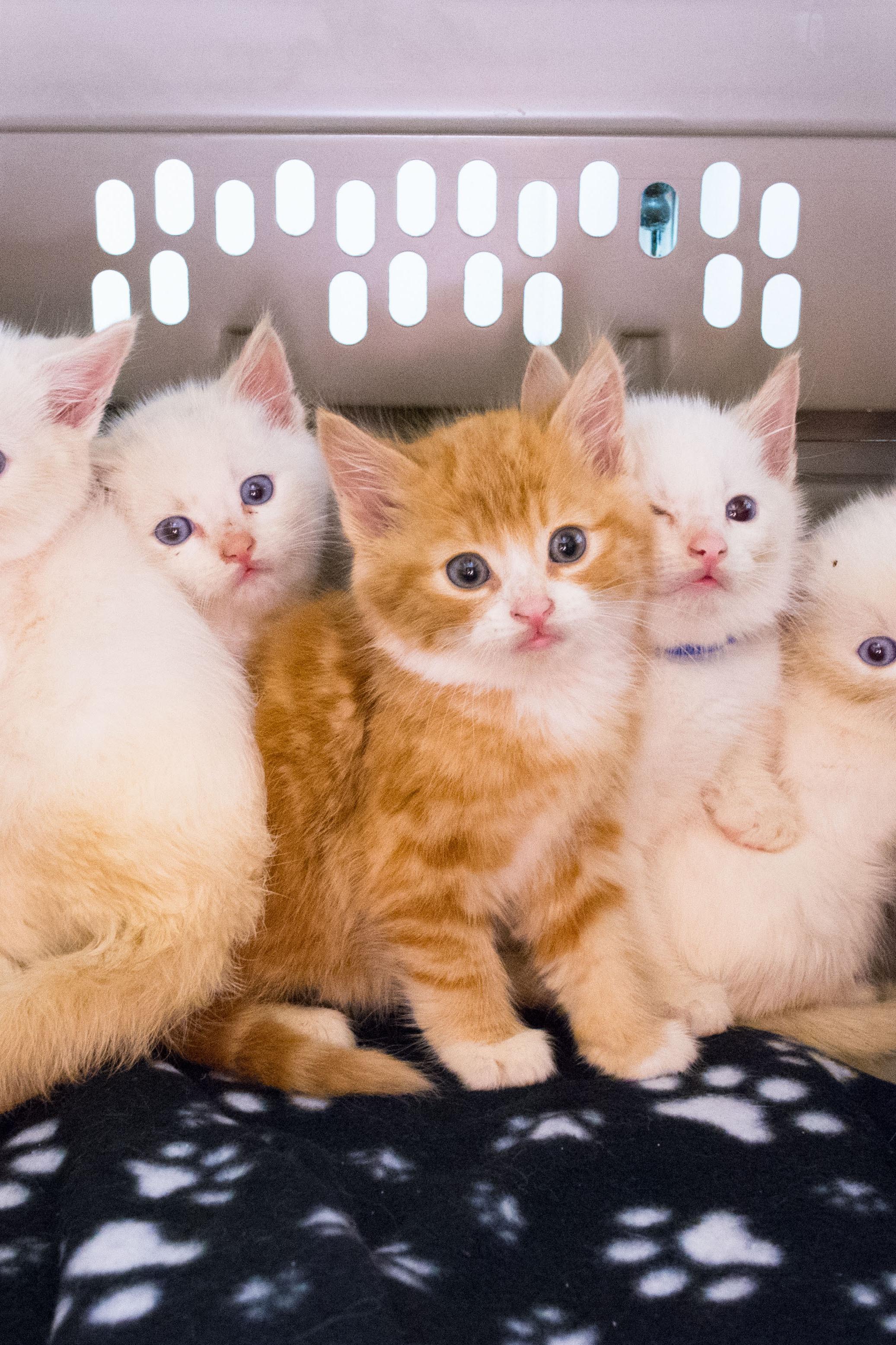 The Sesame Street Kittens on Livestream