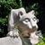 Penn State Abington