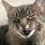 Liz Collins <smitten by kittens>