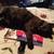 Nola <Carolina Cat Addict>