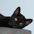 Adler's Foster Kittens (#1)