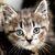 Tony <Tinykittens.com/donate please help>