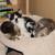 Kim's Foster Kittens