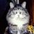 kittycuddler511 (♥Nebr.♫ ♪♪ ♥)