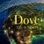 Dove TV 2014- 2015