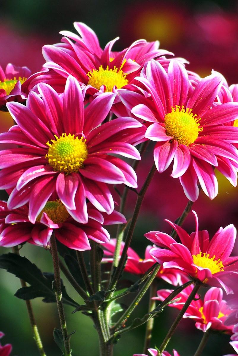 Фото букетов цветов на день рождения