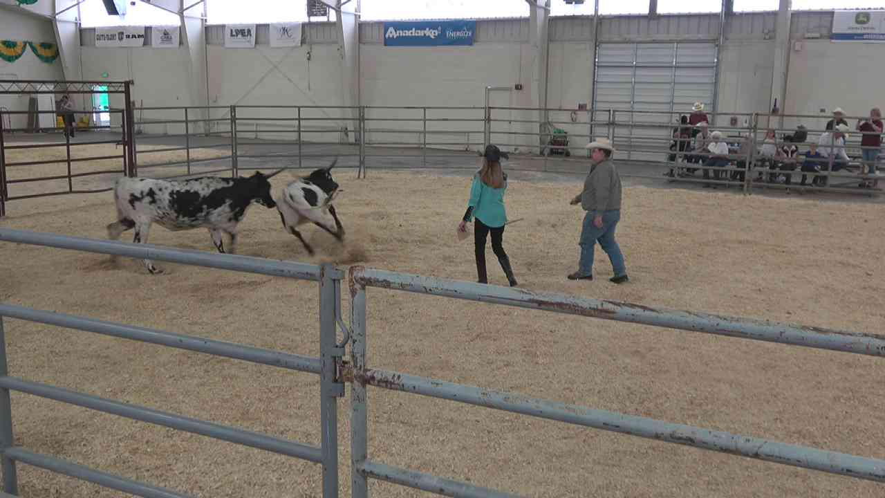 2018 CO State Fair Livestock Shows on Livestream