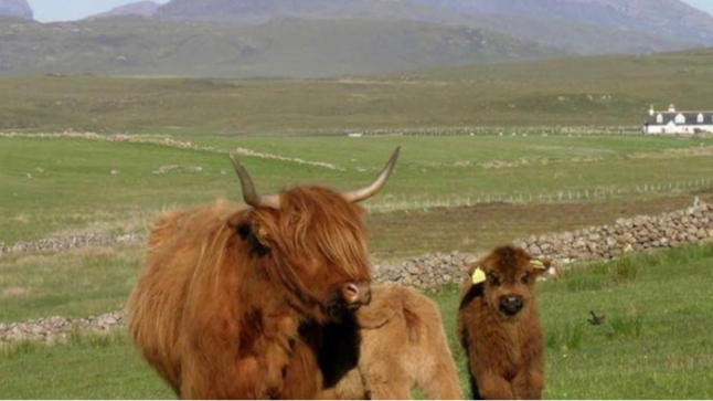 Lorna Paterson NFUS, Ruth Watson #KSTB, Alec Ross farming4Yes