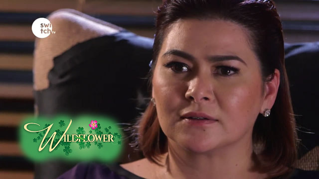 Wild Flower: EP17 - Natalie went to see Arnaldo at his office