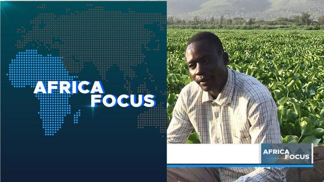 Water hyacinth menace on Lake Victoria